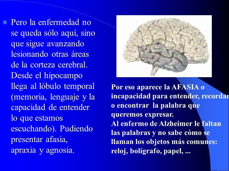 Pero la enfermedad no se queda sólo aquí, sino que sigue avanzando lesionando otras áreas de la corteza cerebral. Desde el hipocampo llega al lóbulo t
