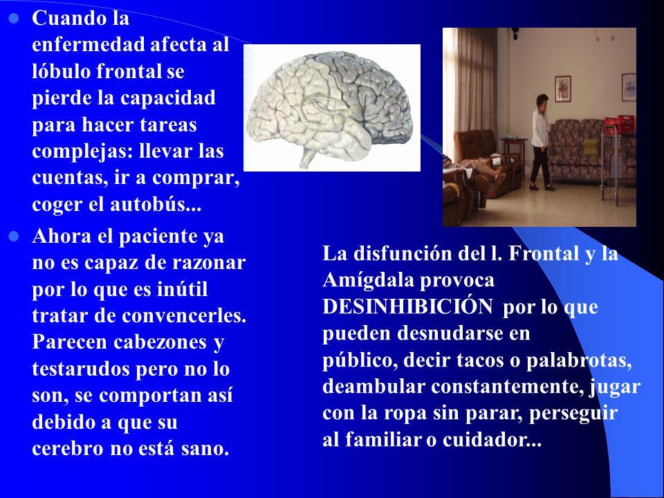 Cuando la enfermedad afecta al lóbulo frontal se pierde la capacidad para hacer tareas complejas: llevar las cuentas, ir a comprar, coger el autobús..