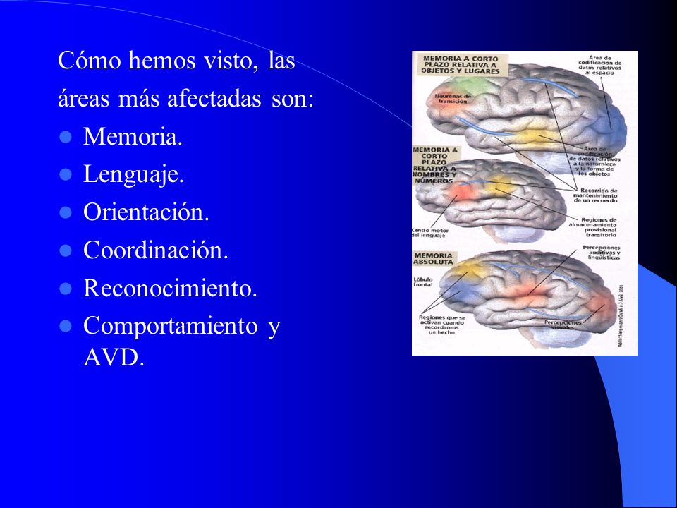 Cómo hemos visto, las áreas más afectadas son: Memoria. Lenguaje. Orientación. Coordinación. Reconocimiento. Comportamiento y AVD.