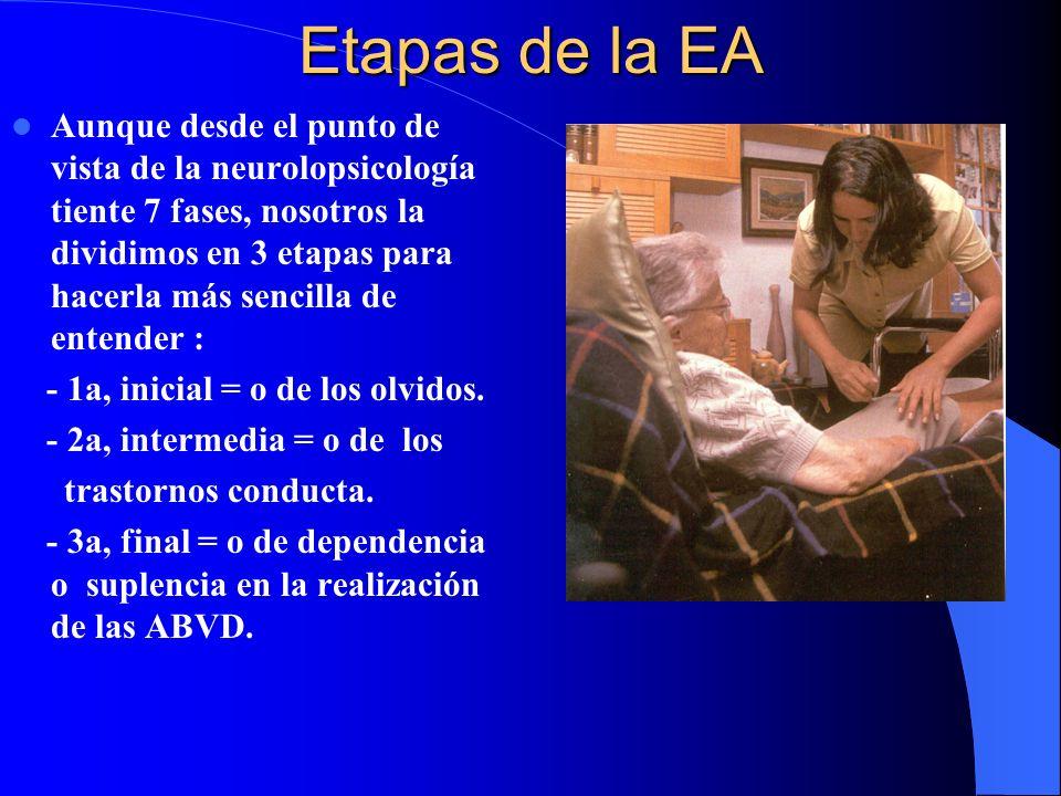 Etapas de la EA Aunque desde el punto de vista de la neurolopsicología tiente 7 fases, nosotros la dividimos en 3 etapas para hacerla más sencilla de entender : - 1a, inicial = o de los olvidos.