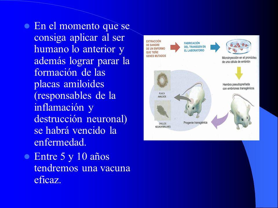 En el momento que se consiga aplicar al ser humano lo anterior y además lograr parar la formación de las placas amiloides (responsables de la inflamac