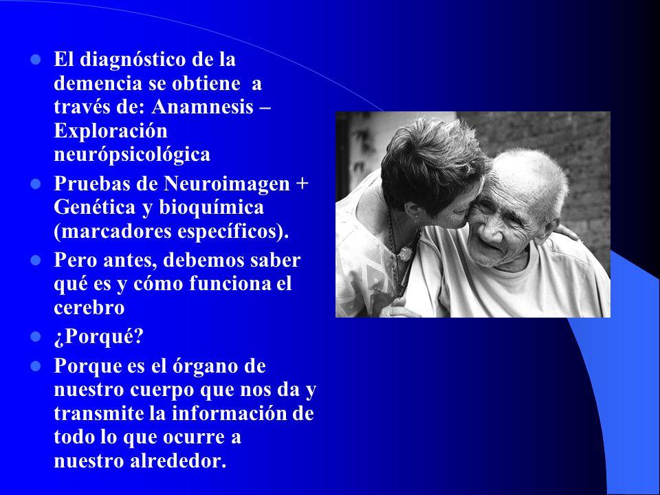 El diagnóstico de la demencia se obtiene a través de: Anamnesis – Exploración neurópsicológica Pruebas de Neuroimagen + Genética y bioquímica (marcadores específicos).