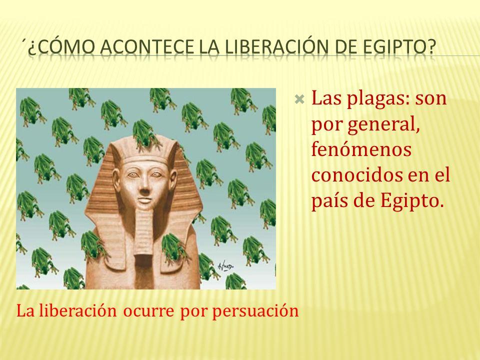 Las plagas: son por general, fenómenos conocidos en el país de Egipto. La liberación ocurre por persuación