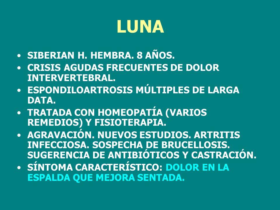 LUNA SIBERIAN H. HEMBRA. 8 AÑOS. CRISIS AGUDAS FRECUENTES DE DOLOR INTERVERTEBRAL. ESPONDILOARTROSIS MÚLTIPLES DE LARGA DATA. TRATADA CON HOMEOPATÍA (