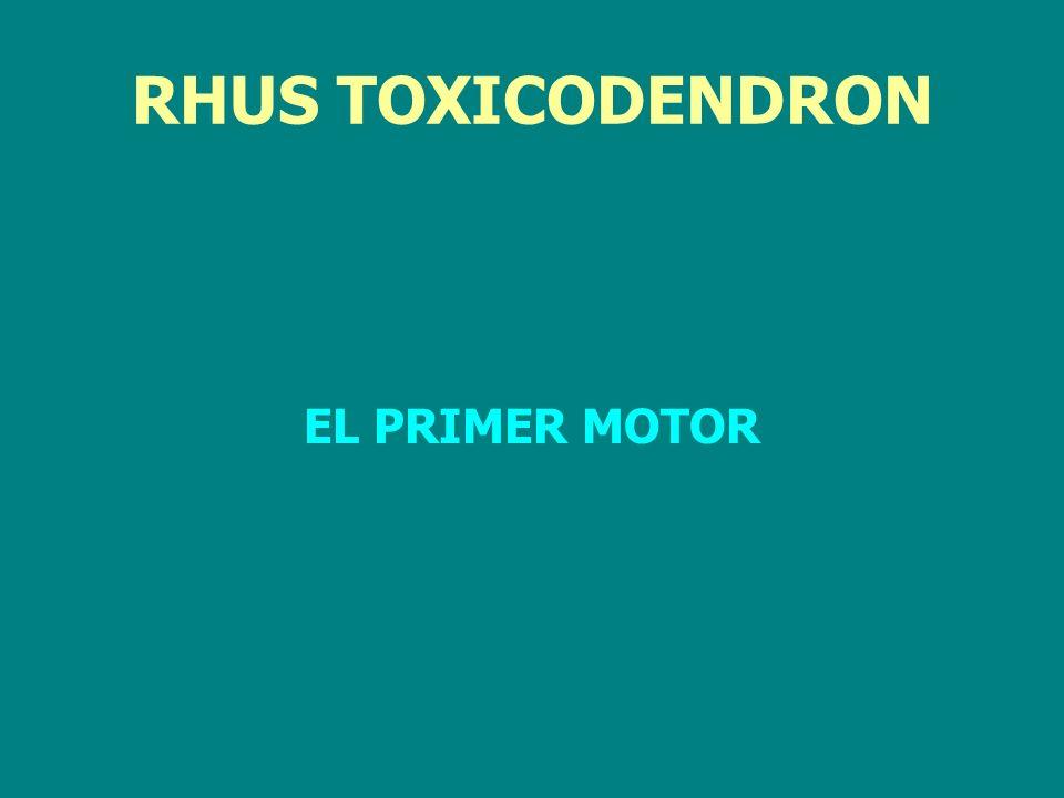 RHUS TOXICODENDRON EL PRIMER MOTOR