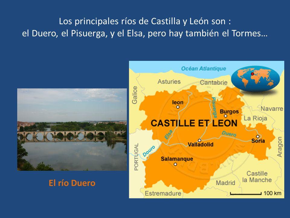 Los principales ríos de Castilla y León son : el Duero, el Pisuerga, y el Elsa, pero hay también el Tormes… El río Duero