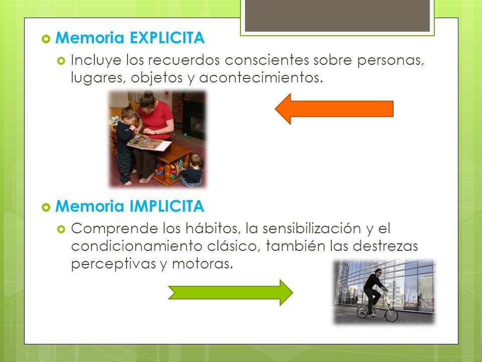 Memoria EXPLICITA Incluye los recuerdos conscientes sobre personas, lugares, objetos y acontecimientos. Memoria IMPLICITA Comprende los hábitos, la se