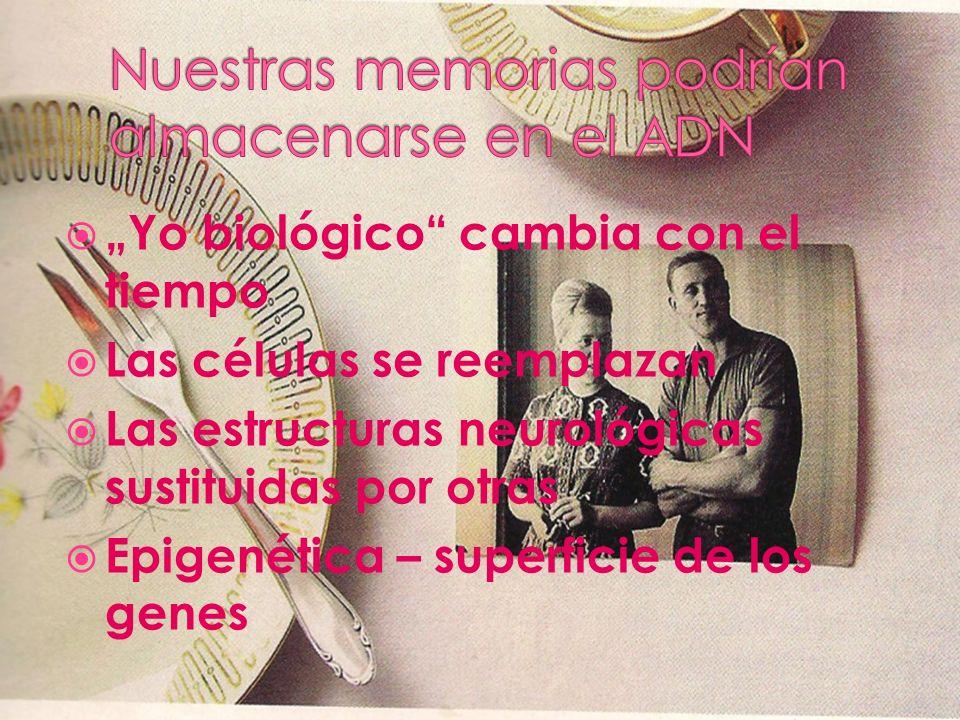 Yo biológico cambia con el tiempo Las células se reemplazan Las estructuras neurológicas sustituidas por otras Epigenética – superficie de los genes