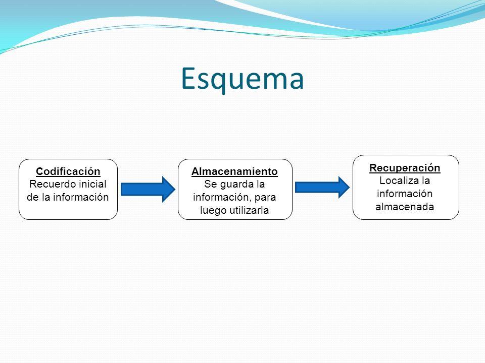 Esquema Codificación Recuerdo inicial de la información Almacenamiento Se guarda la información, para luego utilizarla Recuperación Localiza la inform