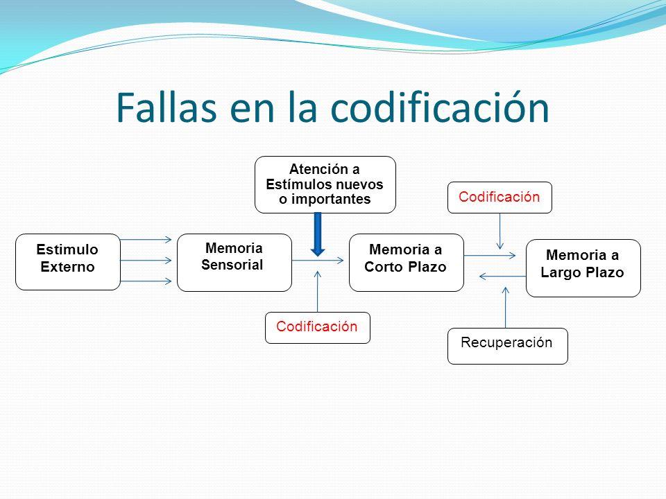 Fallas en la codificación Estimulo Externo Memoria Sensorial Memoria a Corto Plazo Memoria a Largo Plazo Codificación Recuperación Codificación Atenci