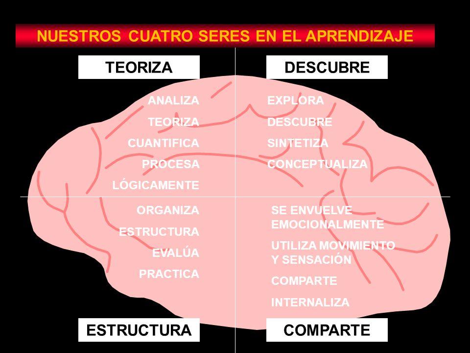 TEORIZADESCUBRE ESTRUCTURACOMPARTE NUESTROS CUATRO SERES EN EL APRENDIZAJE ANALIZA TEORIZA CUANTIFICA PROCESA LÓGICAMENTE EXPLORA DESCUBRE SINTETIZA CONCEPTUALIZA ORGANIZA ESTRUCTURA EVALÚA PRACTICA SE ENVUELVE EMOCIONALMENTE UTILIZA MOVIMIENTO Y SENSACIÓN COMPARTE INTERNALIZA