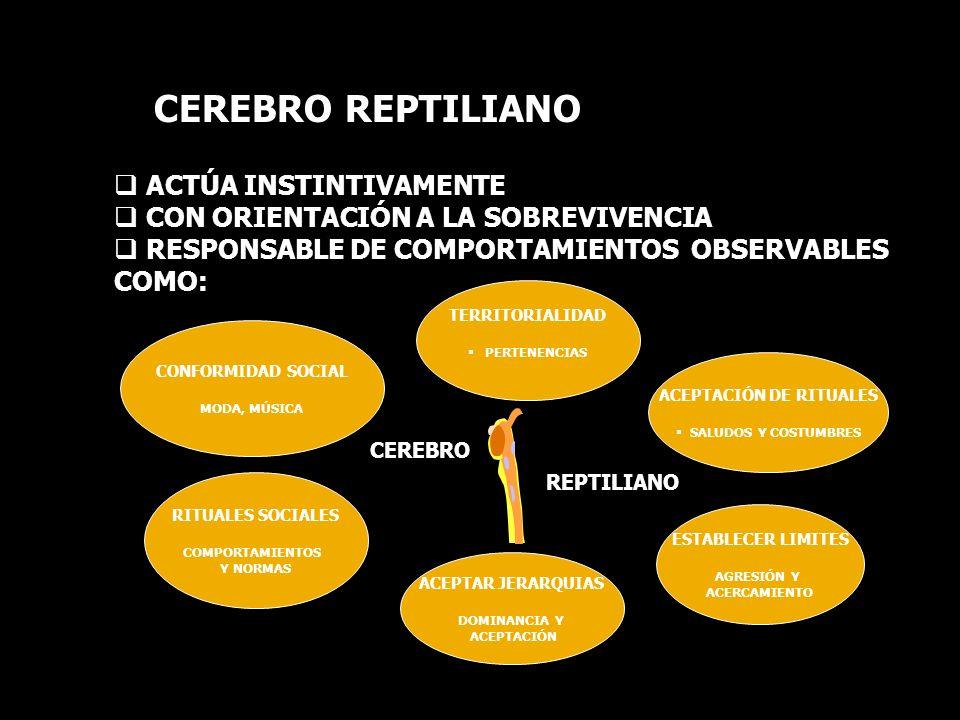 CEREBRO REPTILIANO ACTÚA INSTINTIVAMENTE CON ORIENTACIÓN A LA SOBREVIVENCIA RESPONSABLE DE COMPORTAMIENTOS OBSERVABLES COMO: TERRITORIALIDAD PERTENENCIAS ACEPTACIÓN DE RITUALES SALUDOS Y COSTUMBRES ESTABLECER LIMITES AGRESIÓN Y ACERCAMIENTO ACEPTAR JERARQUIAS DOMINANCIA Y ACEPTACIÓN RITUALES SOCIALES COMPORTAMIENTOS Y NORMAS CONFORMIDAD SOCIAL MODA, MÚSICA CEREBRO REPTILIANO