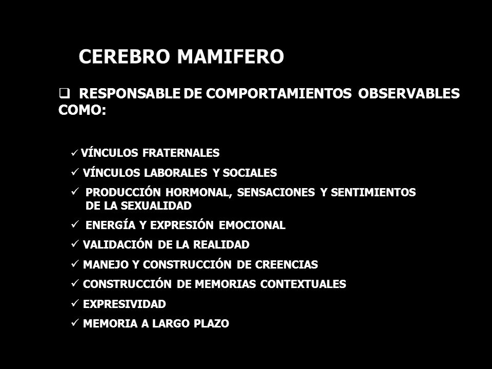 CEREBRO MAMIFERO RESPONSABLE DE COMPORTAMIENTOS OBSERVABLES COMO: VÍNCULOS FRATERNALES VÍNCULOS LABORALES Y SOCIALES PRODUCCIÓN HORMONAL, SENSACIONES Y SENTIMIENTOS DE LA SEXUALIDAD ENERGÍA Y EXPRESIÓN EMOCIONAL VALIDACIÓN DE LA REALIDAD MANEJO Y CONSTRUCCIÓN DE CREENCIAS CONSTRUCCIÓN DE MEMORIAS CONTEXTUALES EXPRESIVIDAD MEMORIA A LARGO PLAZO