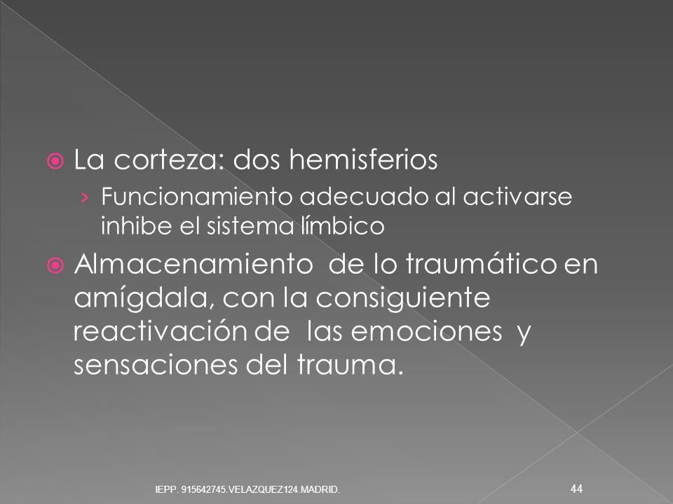 La corteza: dos hemisferios Funcionamiento adecuado al activarse inhibe el sistema límbico Almacenamiento de lo traumático en amígdala, con la consigu