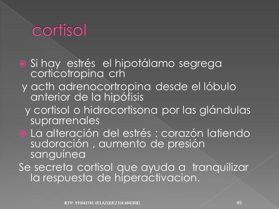Si hay estrés el hipotálamo segrega corticotropina crh y acth adrenocortropina desde el lóbulo anterior de la hipófisis y cortisol o hidrocortisona po