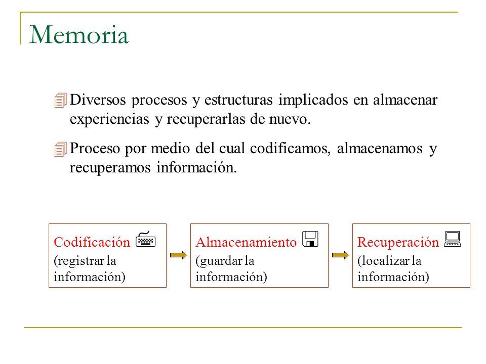 Memoria Codificación (registrar la información) Diversos procesos y estructuras implicados en almacenar experiencias y recuperarlas de nuevo. Proceso