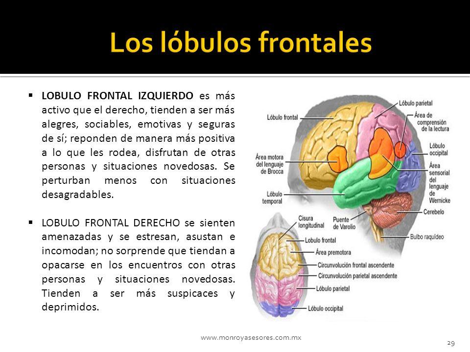 www.monroyasesores.com.mx 29 LOBULO FRONTAL IZQUIERDO es más activo que el derecho, tienden a ser más alegres, sociables, emotivas y seguras de sí; re