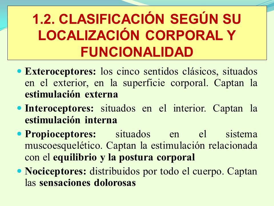 1.2. CLASIFICACIÓN SEGÚN SU LOCALIZACIÓN CORPORAL Y FUNCIONALIDAD Exteroceptores: los cinco sentidos clásicos, situados en el exterior, en la superfic