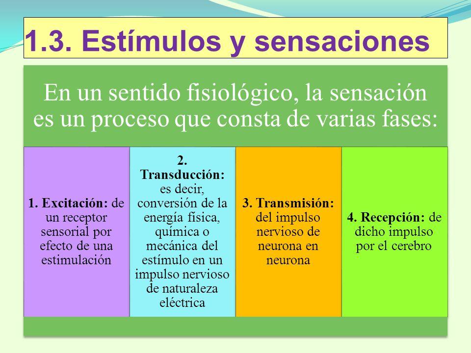 1.3. Estímulos y sensaciones En un sentido fisiológico, la sensación es un proceso que consta de varias fases: 1. Excitación: de un receptor sensorial