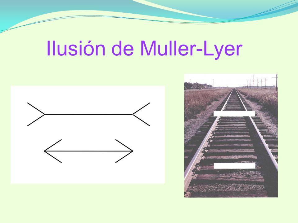Ilusión de Muller-Lyer