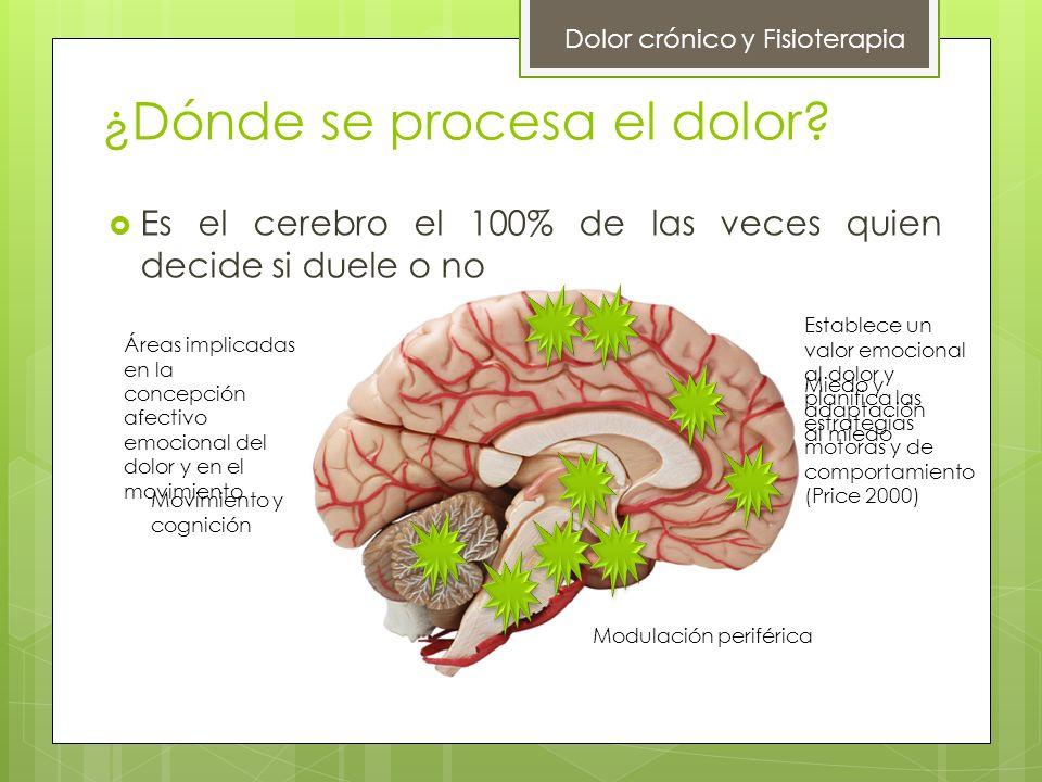 ¿Dónde se procesa el dolor? Es el cerebro el 100% de las veces quien decide si duele o no Dolor crónico y Fisioterapia Establece un valor emocional al