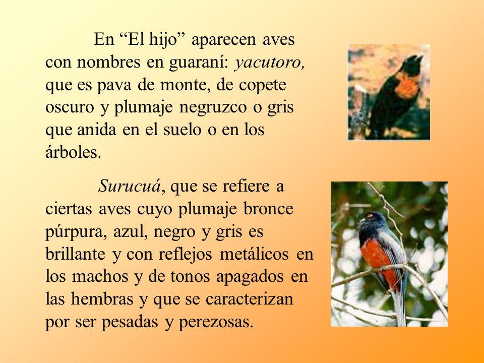 En El hijo aparecen aves con nombres en guaraní: yacutoro, que es pava de monte, de copete oscuro y plumaje negruzco o gris que anida en el suelo o en los árboles.