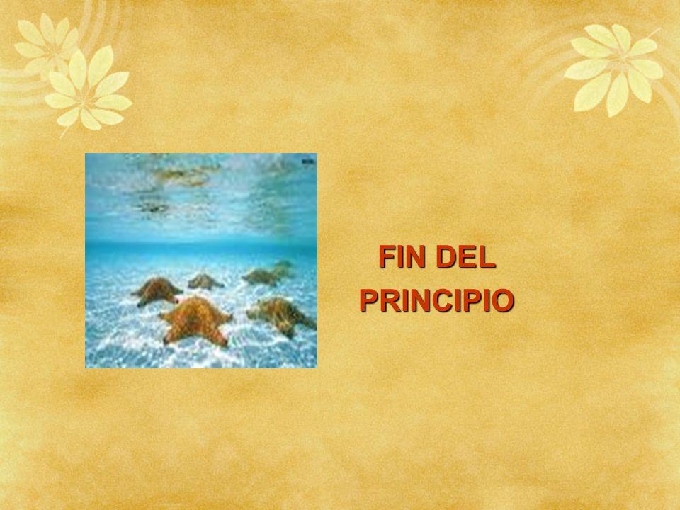 FIN DEL PRINCIPIO PRINCIPIO