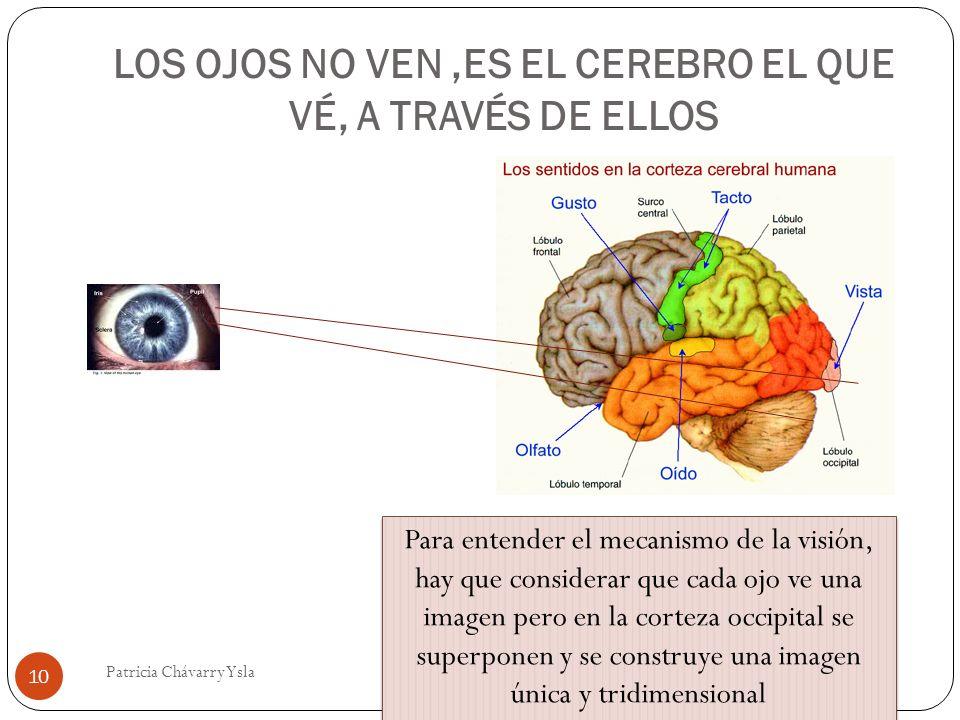 LOS OJOS NO VEN,ES EL CEREBRO EL QUE VÉ, A TRAVÉS DE ELLOS 10 Patricia Chávarry Ysla Para entender el mecanismo de la visión, hay que considerar que cada ojo ve una imagen pero en la corteza occipital se superponen y se construye una imagen única y tridimensional