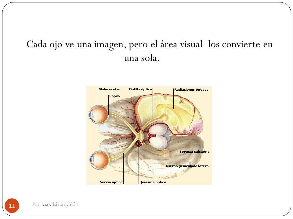 Cada ojo ve una imagen, pero el área visual los convierte en una sola. 11 Patricia Chávarry Ysla