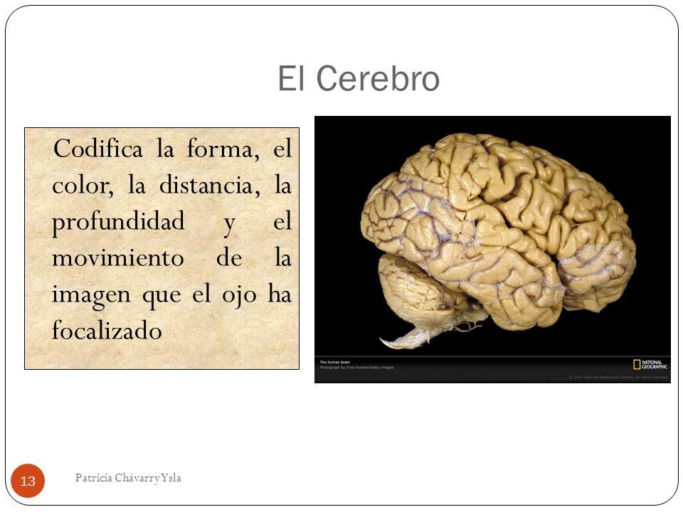 El Cerebro Codifica la forma, el color, la distancia, la profundidad y el movimiento de la imagen que el ojo ha focalizado 13 Patricia Chávarry Ysla