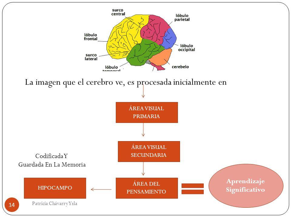 La imagen que el cerebro ve, es procesada inicialmente en ÁREA VISUAL PRIMARIA ÁREA VISUAL SECUNDARIA ÁREA DEL PENSAMIENTO Aprendizaje Significativo HIPOCAMPO Codificada Y Guardada En La Memoria 14 Patricia Chávarry Ysla