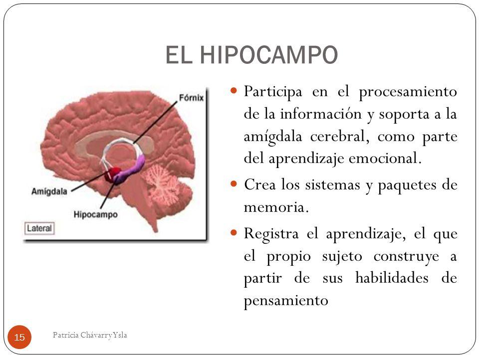 EL HIPOCAMPO Participa en el procesamiento de la información y soporta a la amígdala cerebral, como parte del aprendizaje emocional. Crea los sistemas
