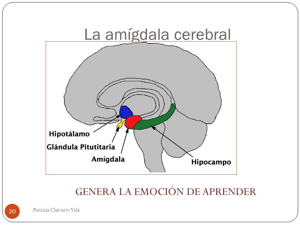 La amígdala cerebral GENERA LA EMOCIÓN DE APRENDER 20 Patricia Chávarry Ysla