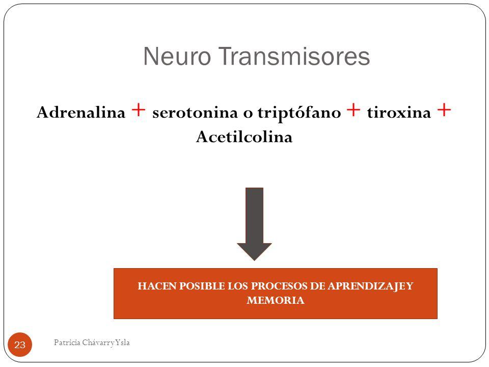 Neuro Transmisores Adrenalina + serotonina o triptófano + tiroxina + Acetilcolina HACEN POSIBLE LOS PROCESOS DE APRENDIZAJE Y MEMORIA 23 Patricia Cháv