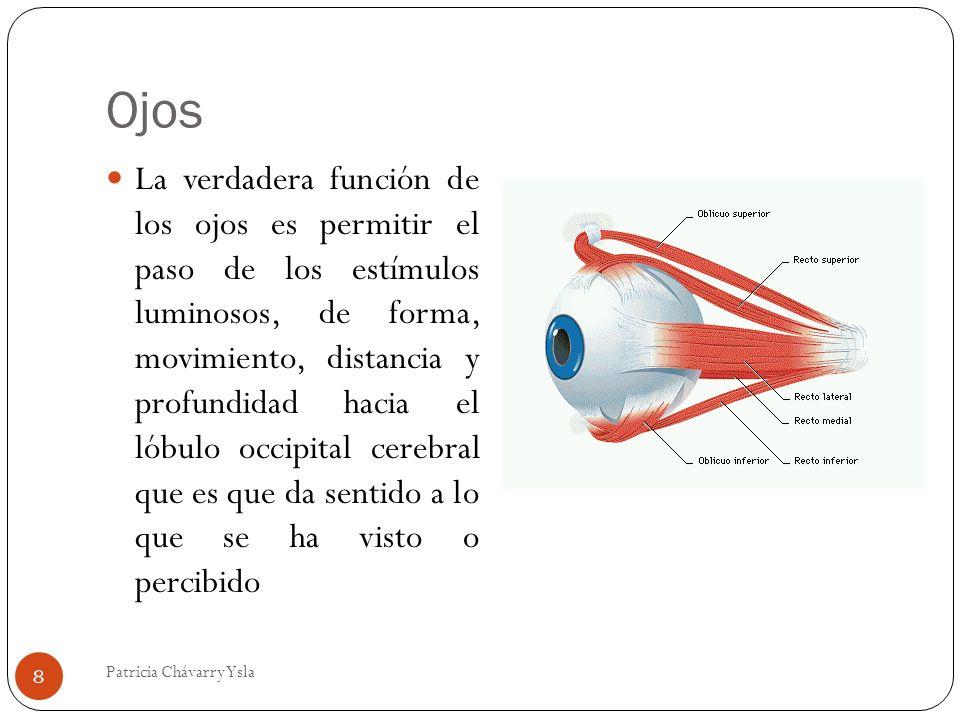 Ojos La verdadera función de los ojos es permitir el paso de los estímulos luminosos, de forma, movimiento, distancia y profundidad hacia el lóbulo occipital cerebral que es que da sentido a lo que se ha visto o percibido 8 Patricia Chávarry Ysla