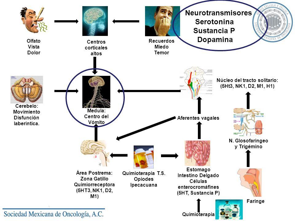 Olfato Vista Dolor Centros corticales altos Recuerdos Miedo Temor Medula: Centro del Vómito Cerebelo: Movimiento Disfunción laberíntica. Núcleo del tr