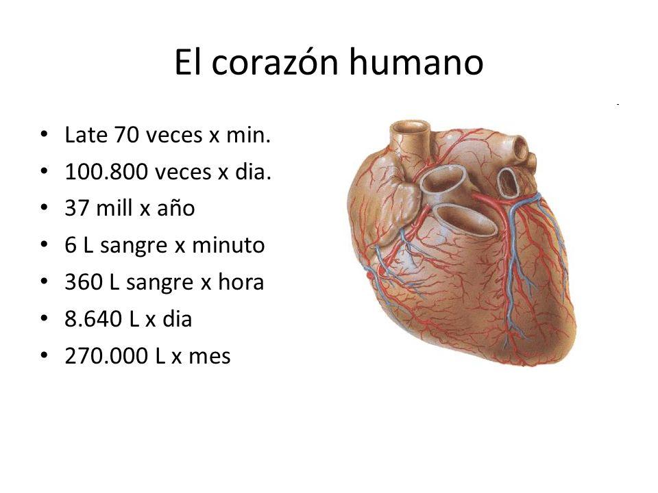 El corazón humano Late 70 veces x min. 100.800 veces x dia. 37 mill x año 6 L sangre x minuto 360 L sangre x hora 8.640 L x dia 270.000 L x mes