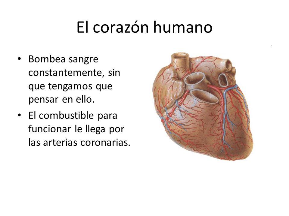 El corazón humano Bombea sangre constantemente, sin que tengamos que pensar en ello. El combustible para funcionar le llega por las arterias coronaria