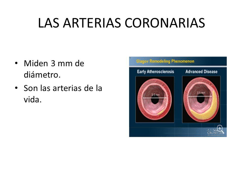 LAS ARTERIAS CORONARIAS Miden 3 mm de diámetro. Son las arterias de la vida.