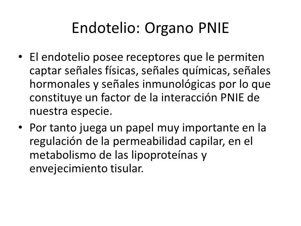 Endotelio: Organo PNIE El endotelio posee receptores que le permiten captar señales físicas, señales químicas, señales hormonales y señales inmunológi