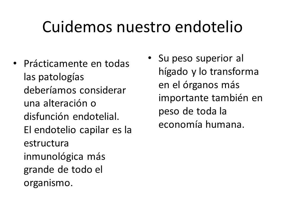 Cuidemos nuestro endotelio Prácticamente en todas las patologías deberíamos considerar una alteración o disfunción endotelial. El endotelio capilar es
