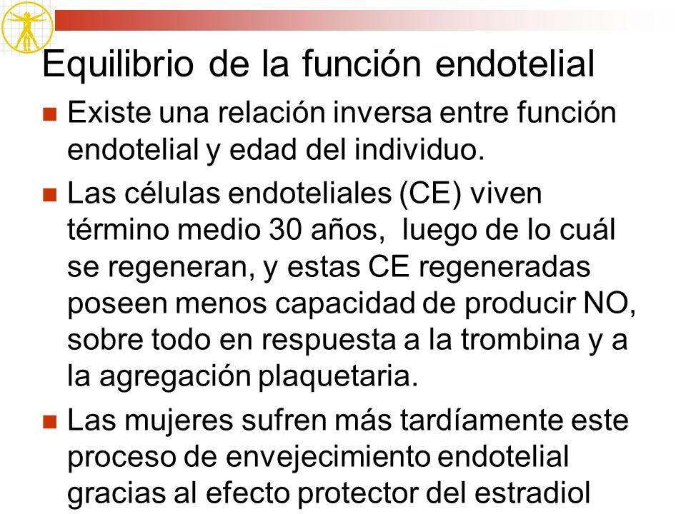 Equilibrio de la función endotelial Existe una relación inversa entre función endotelial y edad del individuo. Las células endoteliales (CE) viven tér