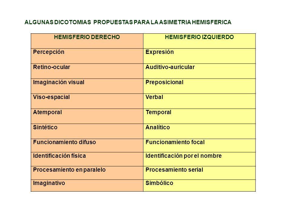 HEMISFERIO DERECHOHEMISFERIO IZQUIERDO PercepciónExpresión Retino-ocularAuditivo-auricular Imaginación visualPreposicional Viso-espacialVerbal Atempor