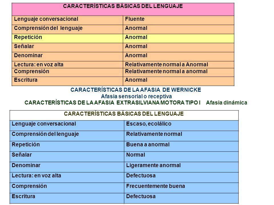 CARACTERÍSTICAS BÁSICAS DEL LENGUAJE Lenguaje conversacionalFluente Comprensión del lenguajeAnormal RepeticiónAnormal SeñalarAnormal DenominarAnormal
