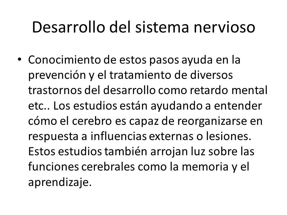 Desarrollo del sistema nervioso Conocimiento de estos pasos ayuda en la prevención y el tratamiento de diversos trastornos del desarrollo como retardo mental etc..