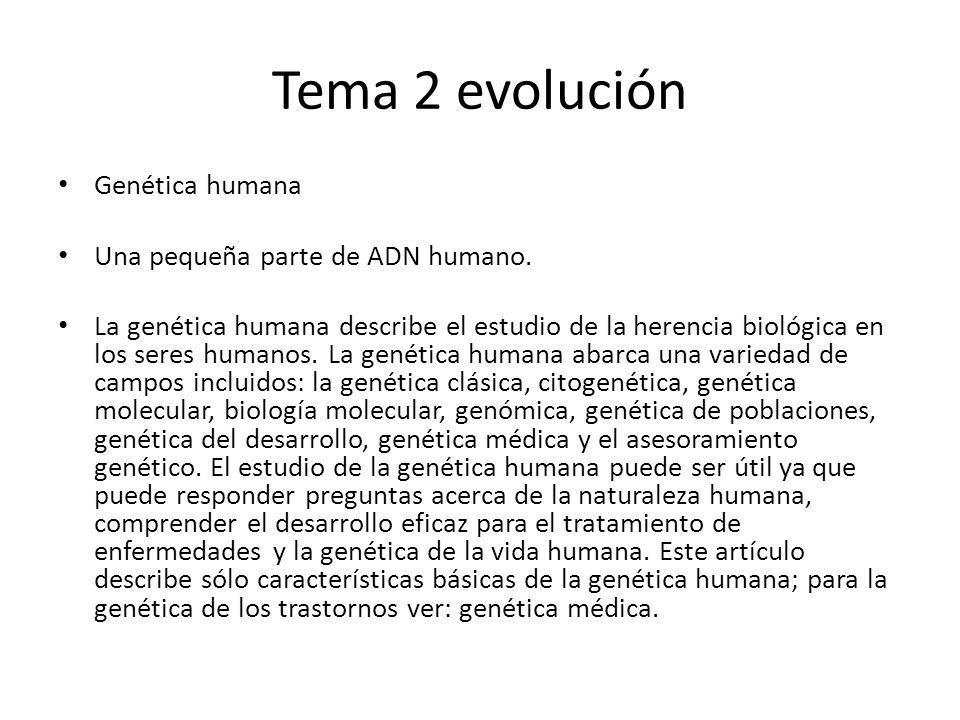 Tema 2 evolución Genética humana Una pequeña parte de ADN humano. La genética humana describe el estudio de la herencia biológica en los seres humanos
