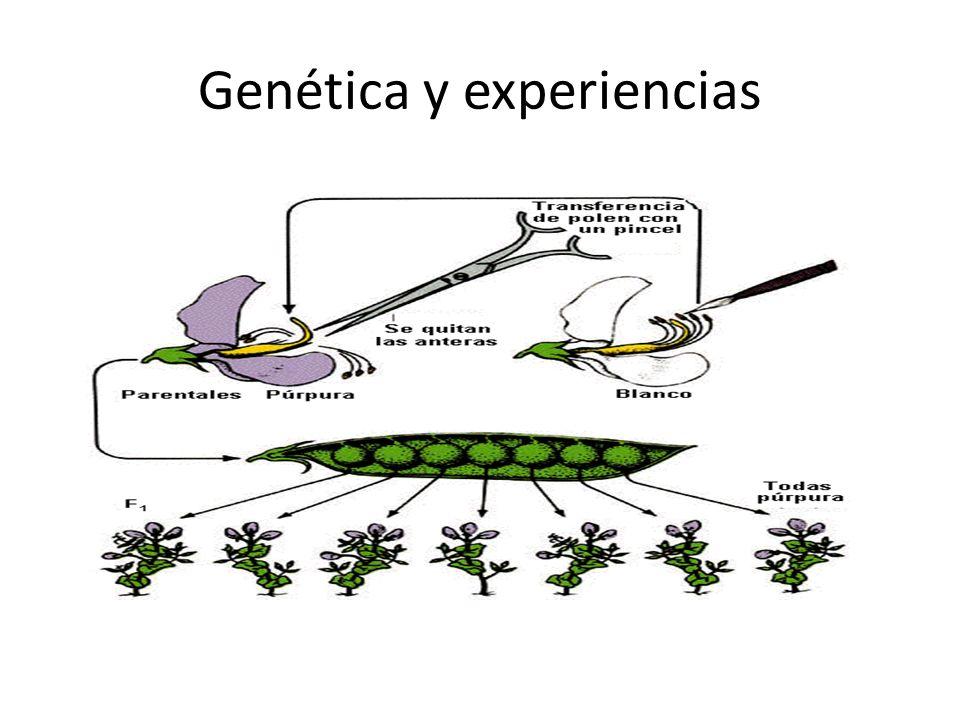 Genética y experiencias