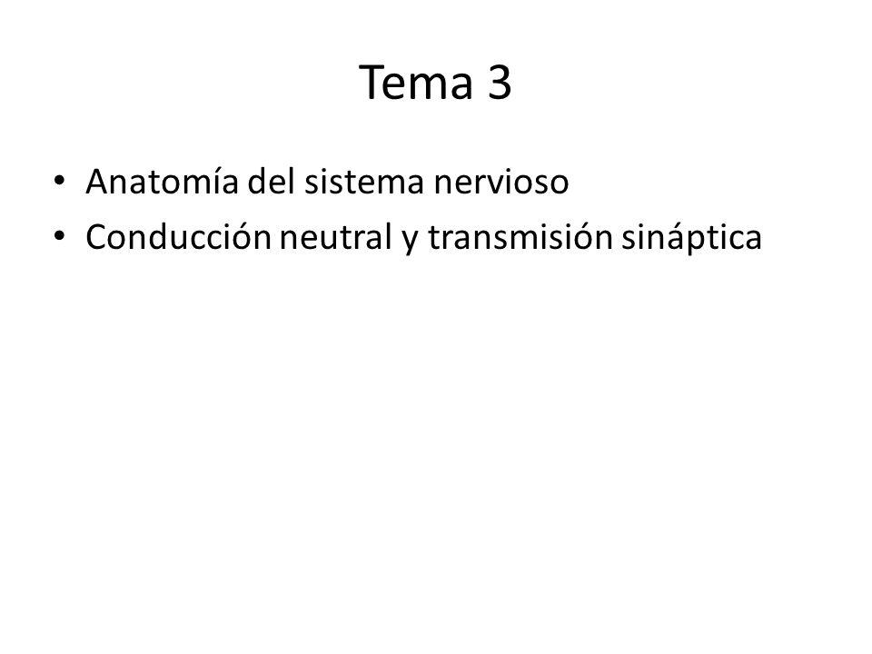 Tema 3 Anatomía del sistema nervioso Conducción neutral y transmisión sináptica