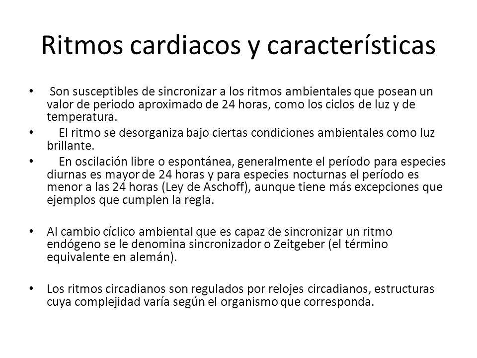 Ritmos cardiacos y características Son susceptibles de sincronizar a los ritmos ambientales que posean un valor de periodo aproximado de 24 horas, com