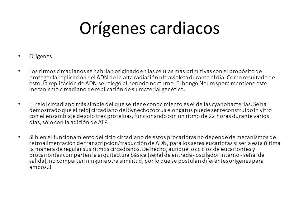 Orígenes cardiacos Orígenes Los ritmos circadianos se habrían originado en las células más primitivas con el propósito de proteger la replicación del ADN de la alta radiación ultravioleta durante el día.